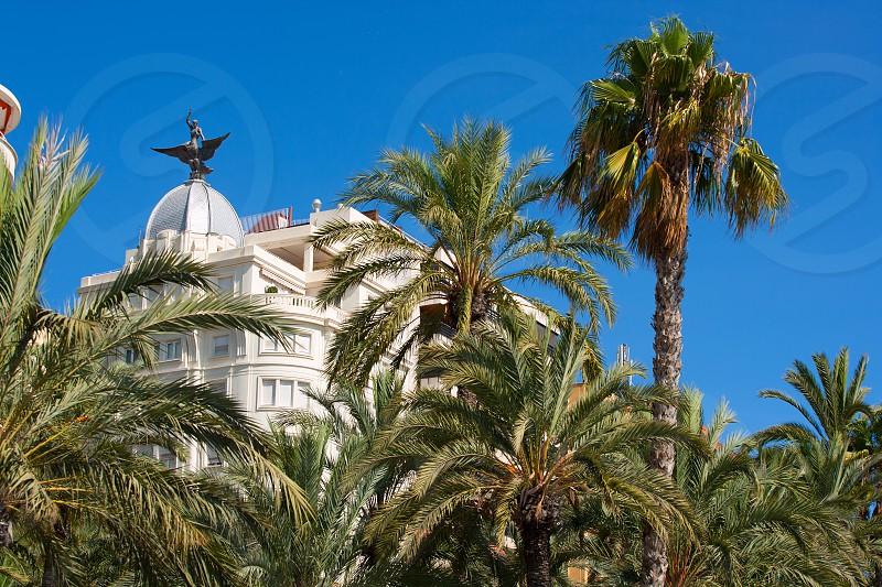 Alicante La Explanada buildings with plam trees in Valencian community of Spain photo