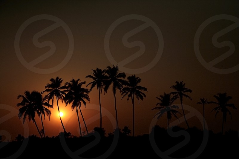Sunset in tropics. photo