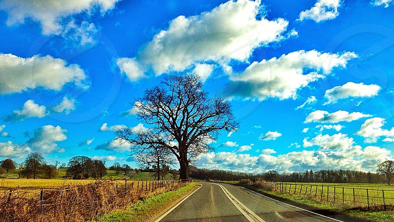 leafless tree located at roadside in between 2 green fields under white and blue skies during daytime photo