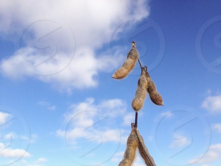 brown peanuts photo