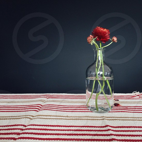 red flower in clear glass bottle photo