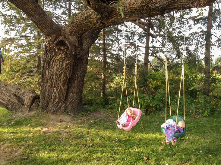 two children in tree swings photo