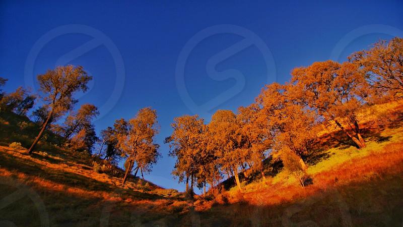 Mountain semeru tree trees photo