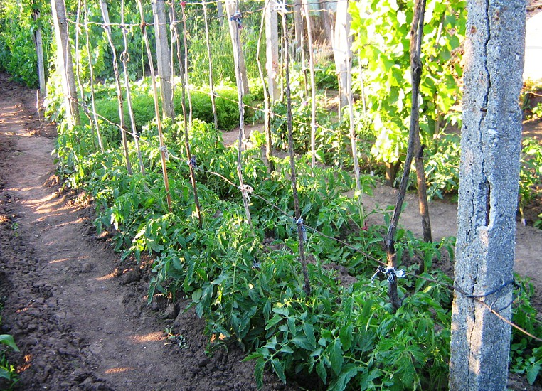 Food Garden photo