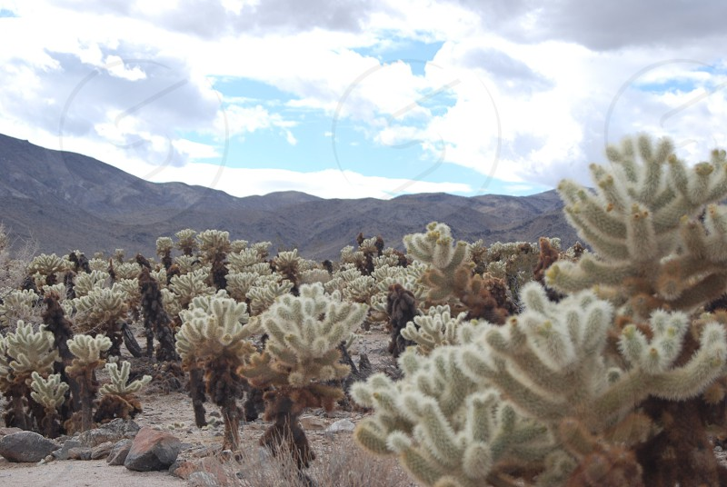 Joshua Tree National Park photo