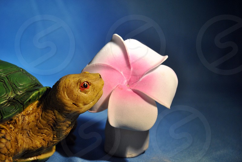 Turtle & Plumeria Fun photo