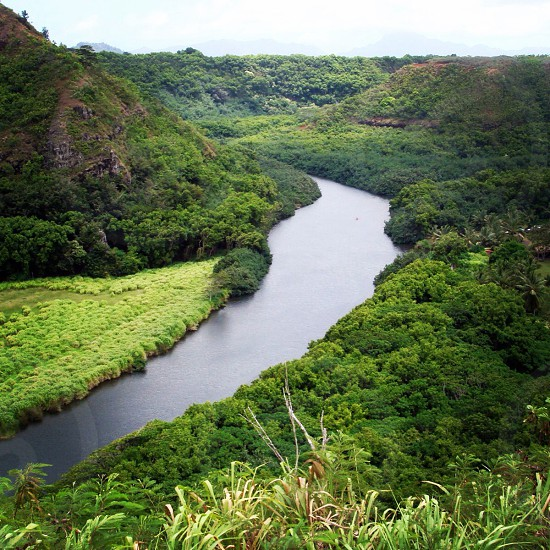 River running through a green jungle photo