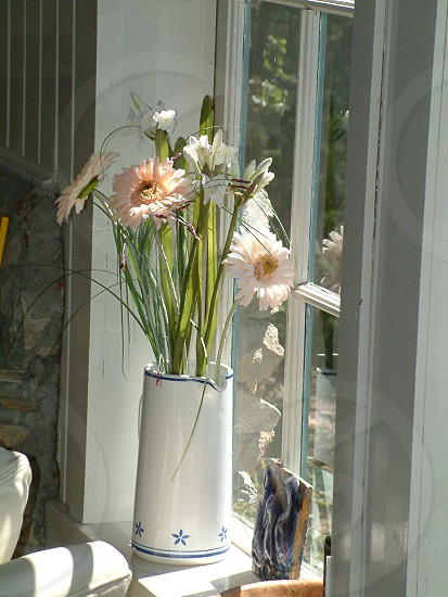 Sunny window filled with life. photo