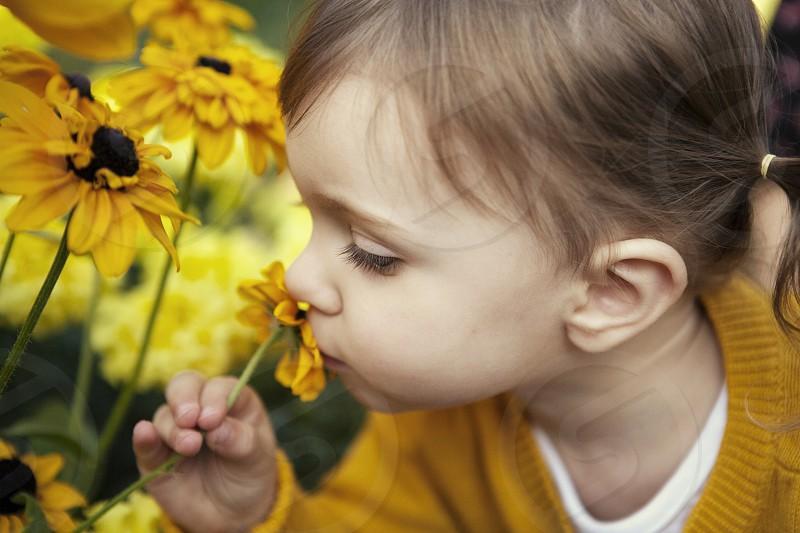 little girl smelling flower yellow sunflower child girl kid toddler photo
