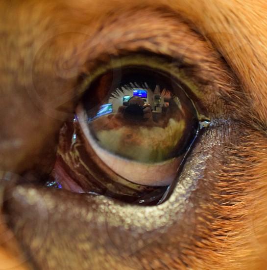 macro photography of dog's eye photo