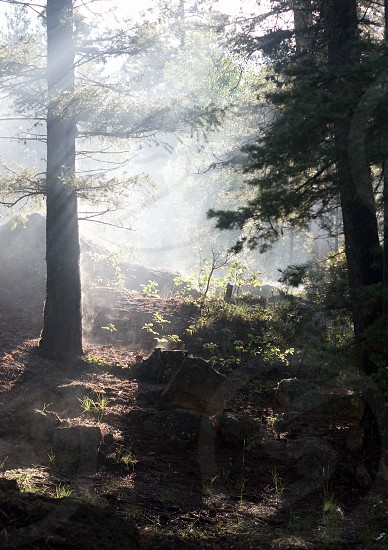 fog in forest photo