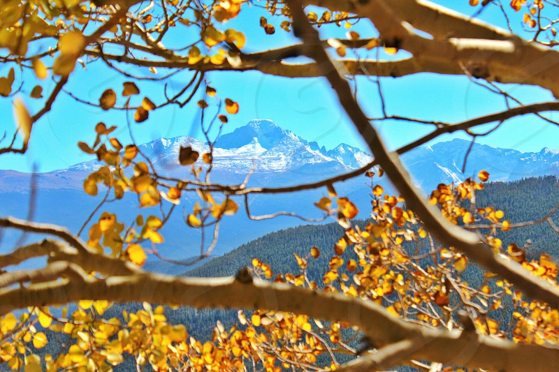 You can almost smell the crisp Colorado air! photo