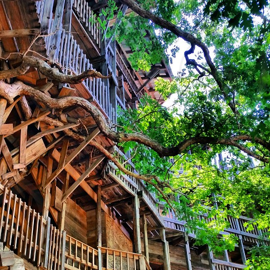 World's biggest treehouse  photo