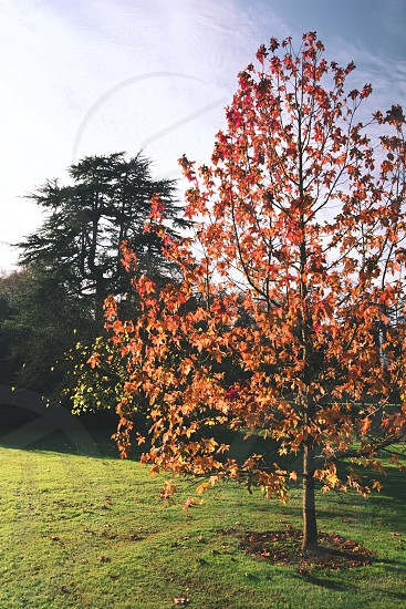 Nature's flame. Taken in Exeter Devon UK. photo