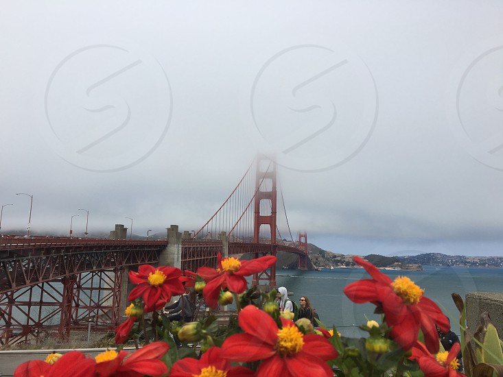 A cloudy sky view of the Golden Gate Bridge from Fort Point San Francisco with red and yellow blooming flowers in the frame photo