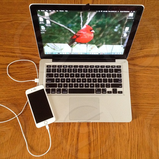 Charging smartphone and laptop with cardinal as a screensaver  photo