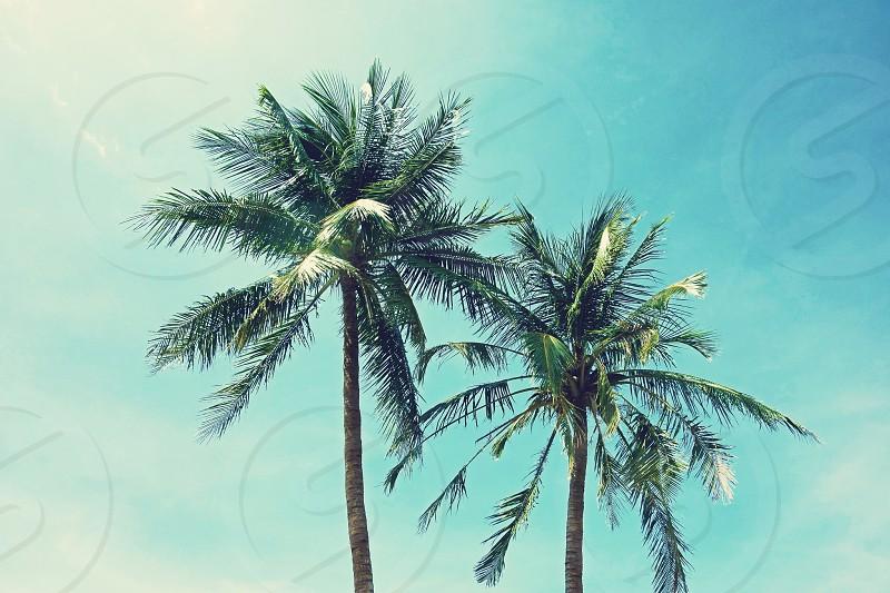 palm trees summer sky sunny vacation tropical photo