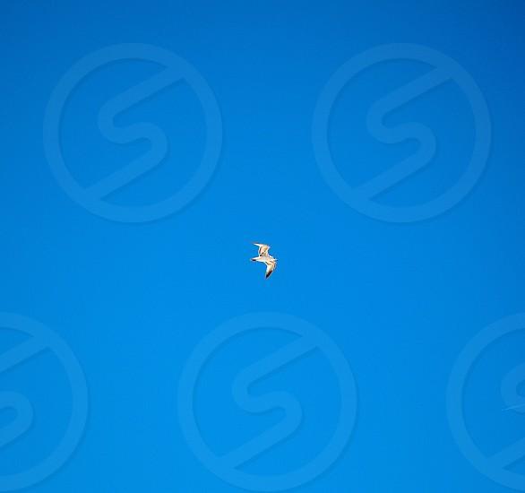Bird in the sky photo