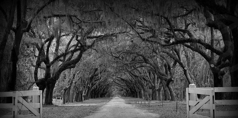 Savannah GA Wormsloe Plantation photo