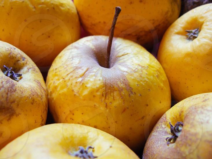 Apple from Val di Non South Tyrol Alto Adige Italy Farm Farmer countryside healthy organic photo