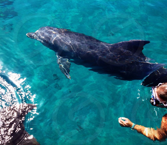 Snorkeling with the dolphins photo