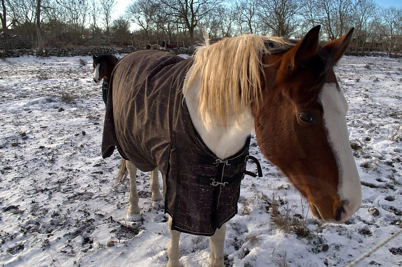 brown and white horse standing on snow photo