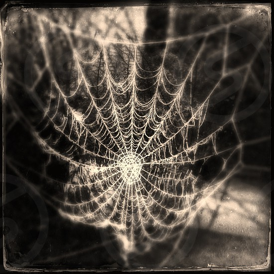 Tintype of spider web covered in frost photo