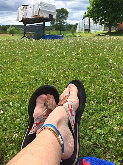 Relaxing at the library waiting for a presentation of raptors on a summer day - relaxing feet crossed flip flops grass clover green summer  photo