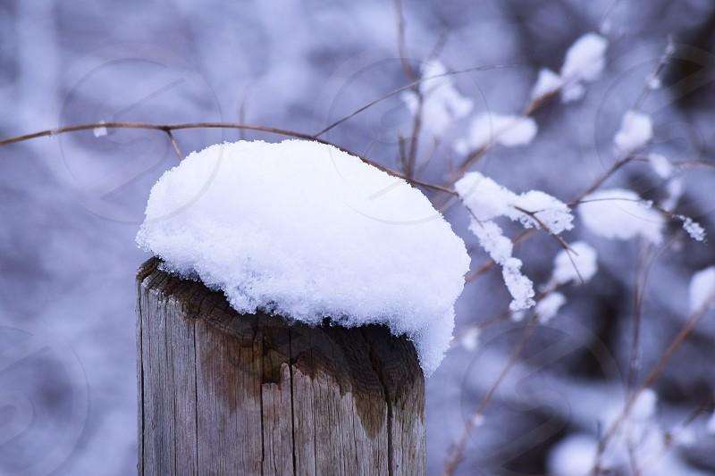 focus photography of tree branch covered in snow at daytime photo