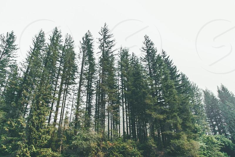 Naked Falls WA photo