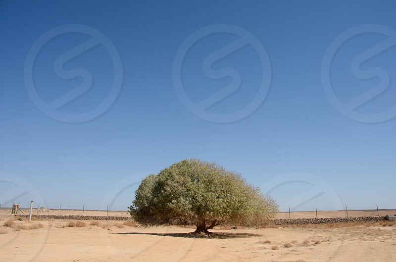 The blessed tree where holy prophet (PBUH) rested on the way to Syria.  photo