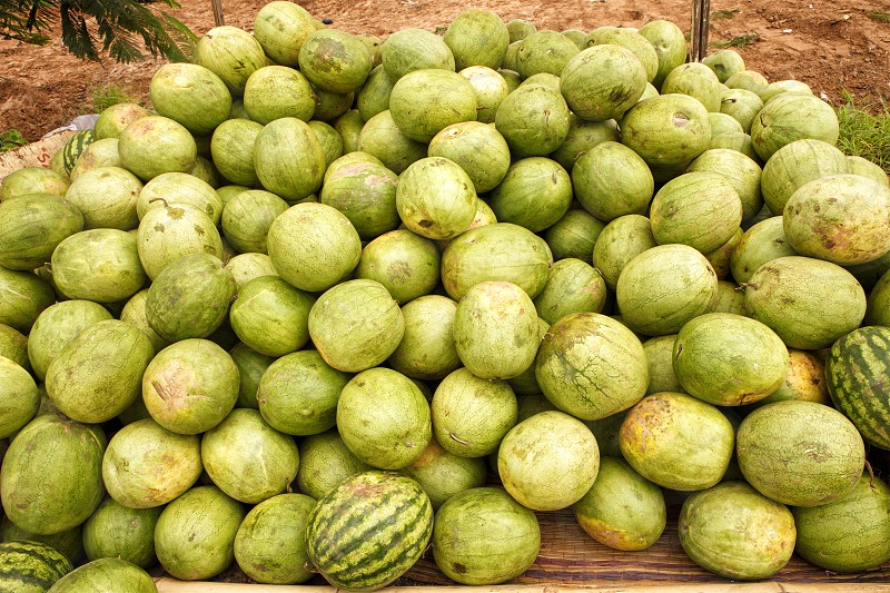 Farm to Table - watermelons in Africa photo