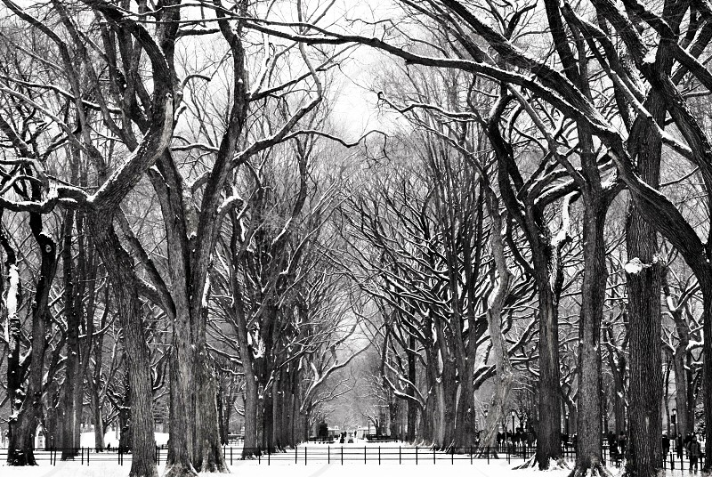 black and white photo of trees and snow photo