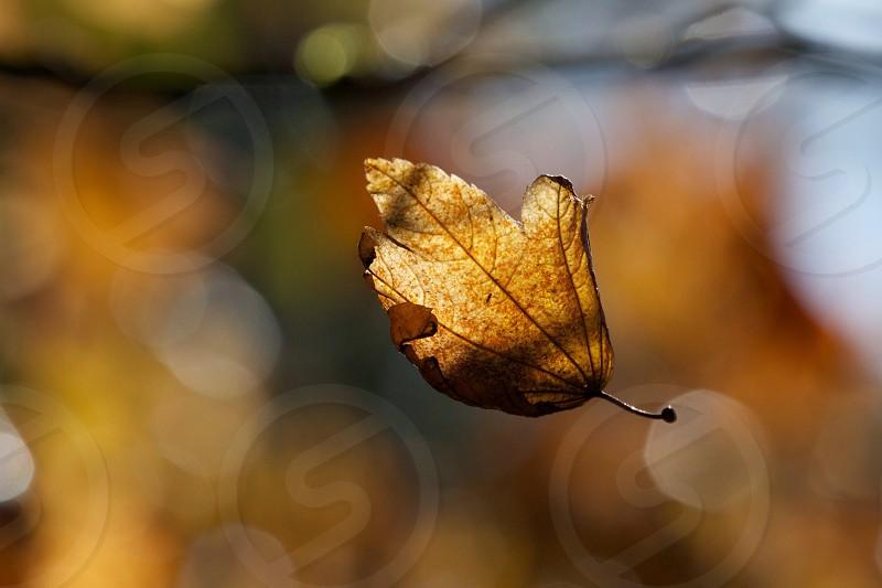 A leaf in midflight photo