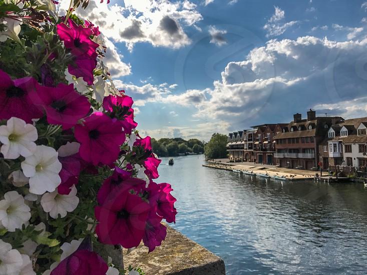 Outdoor day colour landscape horizontal River Thames Windsor UK water ripples flowers Petunias pink white contrast sun sunshine summer travel tourism wanderlust sky blue bright vivid photo