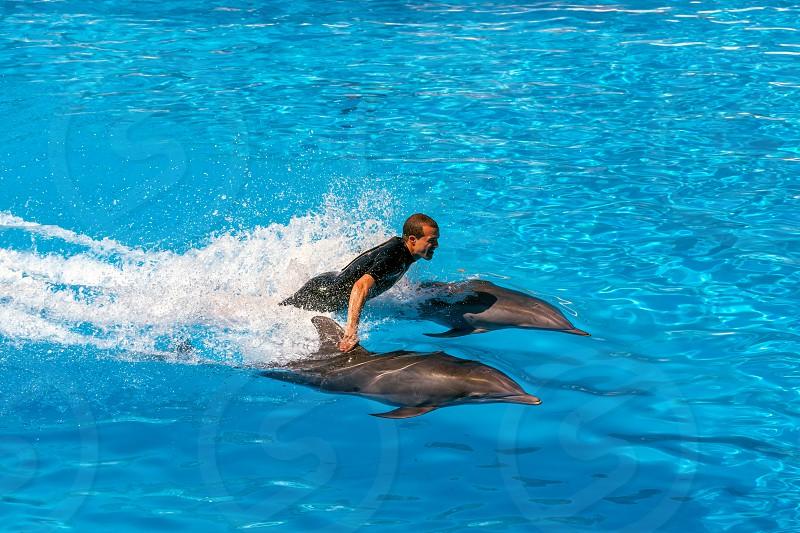 Dolphin Show photo