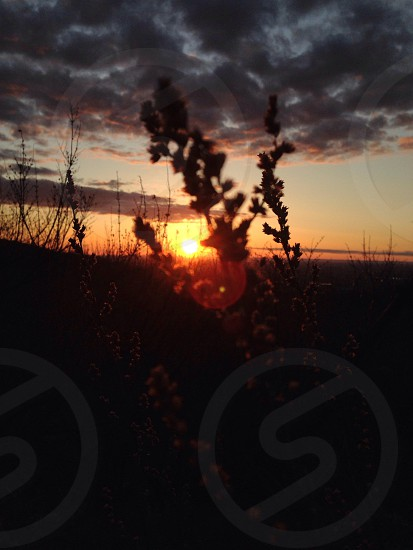 silhouette of plants during orange sunset photo