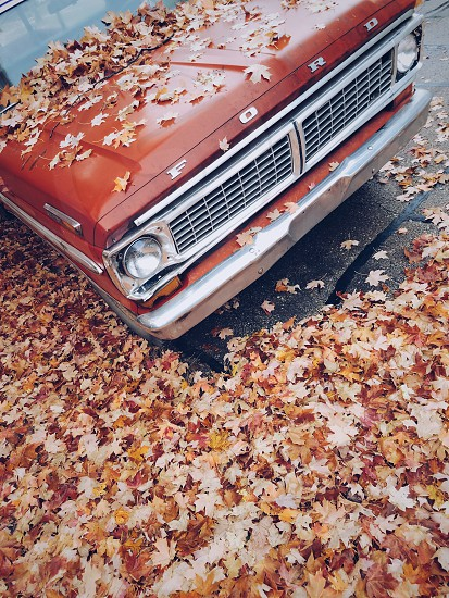 red Ford car surrounded with dry leaves photo