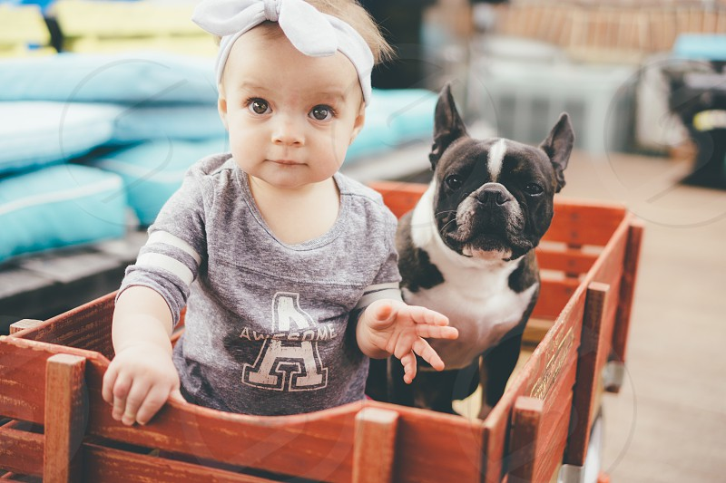 A girl and her dog infant Boston terrier photo