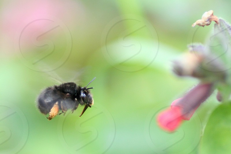 black bee macro photography photo