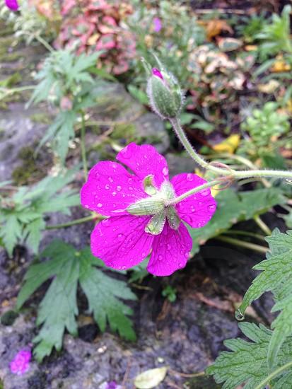 Raindrop on flower photo