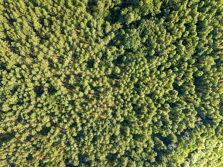 Aerial view from the drone of environmentally friendly foliage forest with a dirt road on a summer sunny day. Top view photo