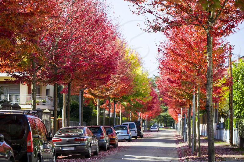 Traveling by car in Europe. Cars parked on the autumn street in Olot. Spain photo