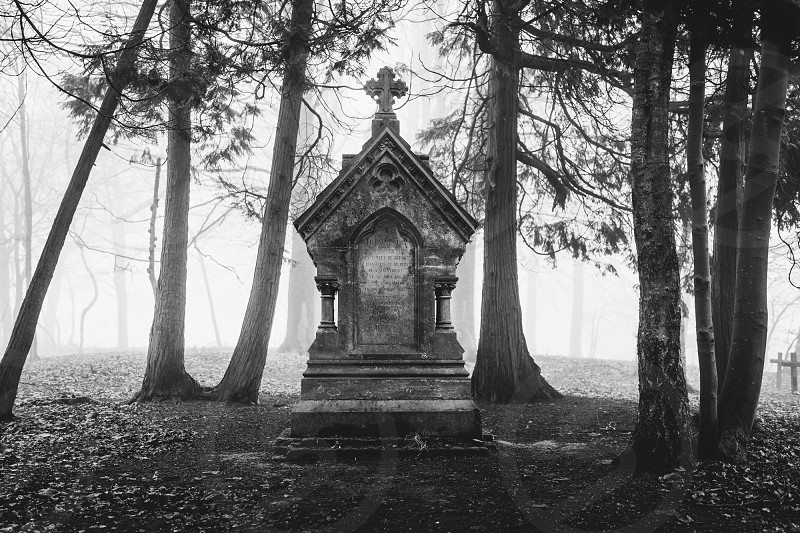 Monumental grave in foggy haunted wood. photo