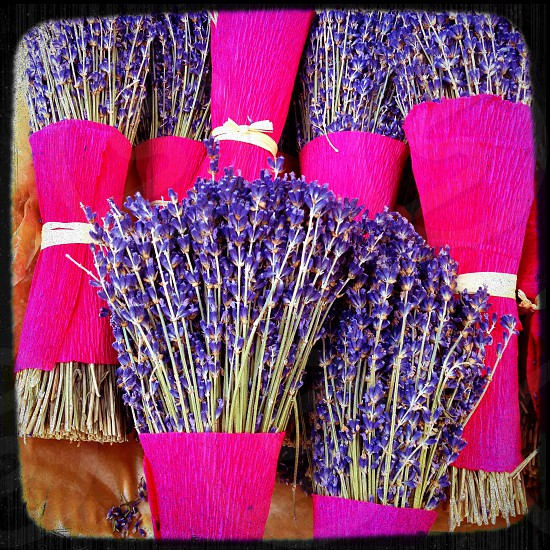 dried lavender bunches photo