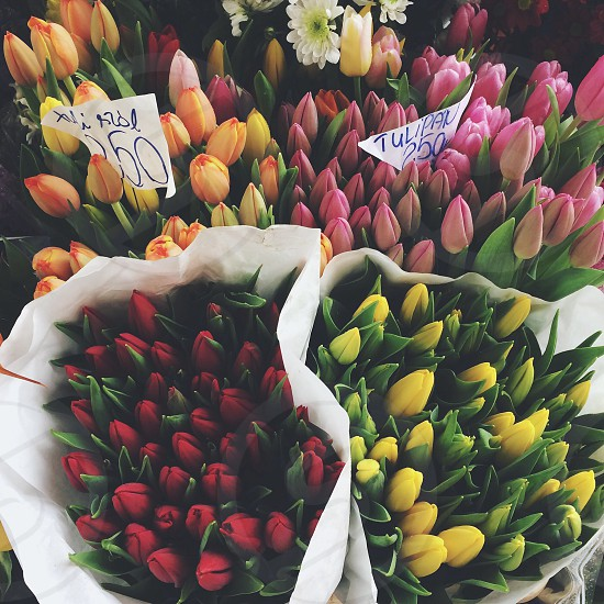 #tulips #flowers #travel photo