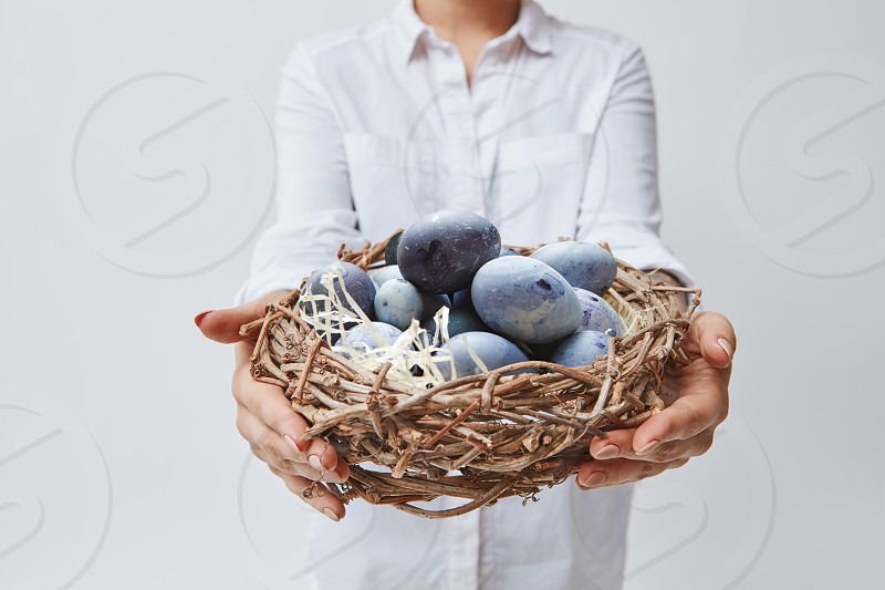 Girl gives a nest out of branches with painted in blue eggs on a white background.Happy Easter photo