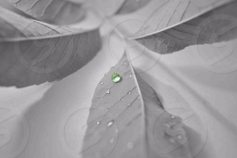 water droplets on leaf photo
