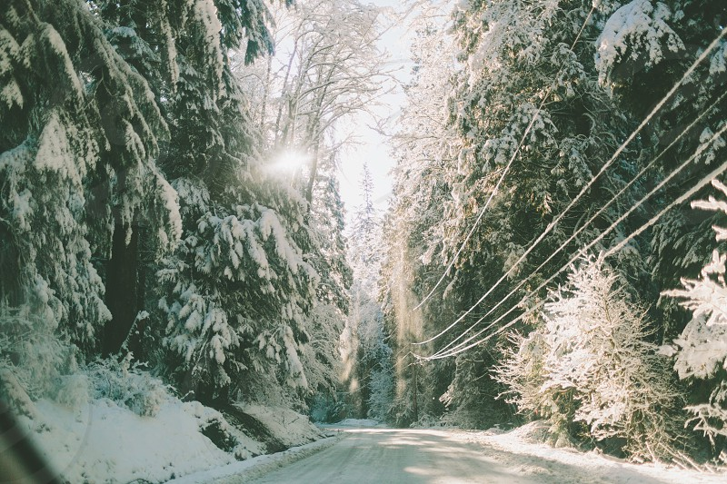 A scenic view of a snowy forest from the road.  photo