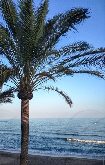 Palm tree see ocean peaceful holiday travel vacation photo